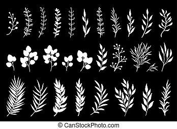ブランチ, 木, 葉, 白, セット