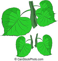 ブランチ, 葉, 背景, 緑の白