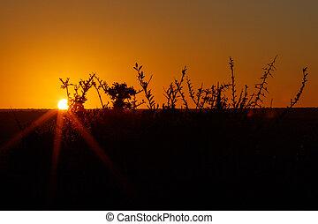 ブランチ, -, addo, 日没, オレンジ, 風景