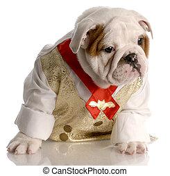 ブルドッグ, の上, 身に着けていること, タイ, ワイシャツ, 服を着せられる, 英語, 子犬