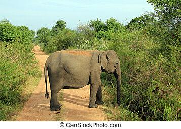 ブロックする, 道, 象