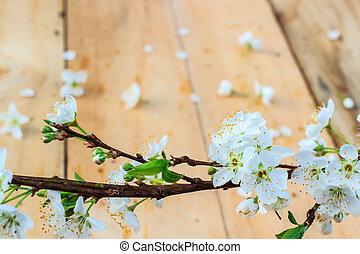 プラム花, ∥で∥, 白い花, 上に, 木, バックグラウンド。