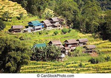 プリミティブ, フィールド, ネパール, 家, 小さい, 米, ∥あるいは∥, 水田