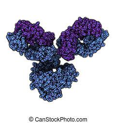 プレーしなさい, igg1, (immunoglobulin)., 役割, 抗体, 必要, monoclonal