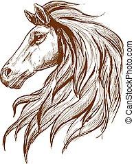 プロフィール, アラビアの馬, スケッチ, 頭