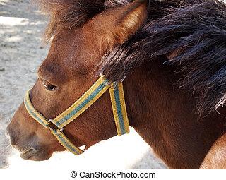 プロフィール, 茶色の馬, クローズアップ, 頭