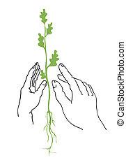 ベクトル, イラスト, の, ∥, 植物, 中に, 手