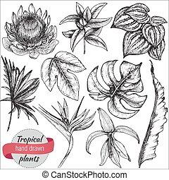ベクトル, コレクション, の, 手, 引かれる, 熱帯の花, そして, 葉