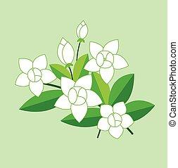 ベクトル, ジャスミン, 花