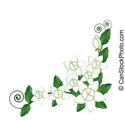 ベクトル, ジャスミン, 花, 背景