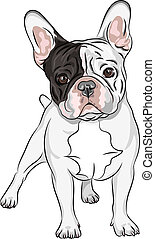 ベクトル, スケッチ, 国内 犬, フランスのブルドッグ, 品種