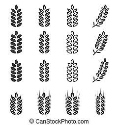 ベクトル, セット, 小麦, アイコン