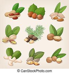 ベクトル, セット, 様々, イラスト, nuts.