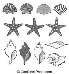 ベクトル, セット, 海, ヒトデ, 殻