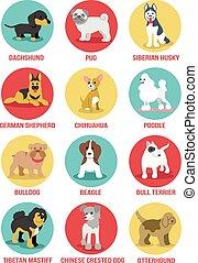 ベクトル, セット, 犬, アイコン