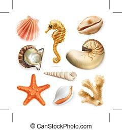 ベクトル, セット, 貝殻, アイコン