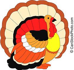 ベクトル, トルコ, 鳥