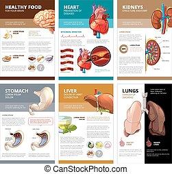 ベクトル, 人間, infographic., チャート, 図, 内部, テンプレート, パンフレット, 器官