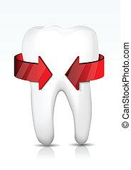 ベクトル, 保護, 歯
