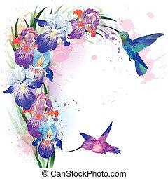 ベクトル, 印刷, 花, ハチドリ, アイリス
