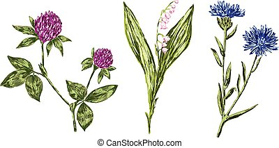 ベクトル, 図画, 野生の花, 様々