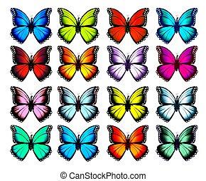 ベクトル, 大きい, コレクション, カラフルである, butterflies.