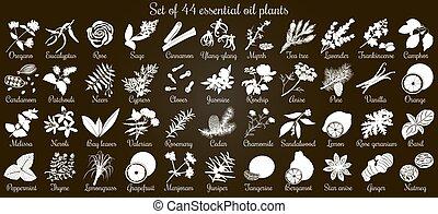 ベクトル, 平ら, スタイル, セット, 大きい, 44, シルエット, オイル, 黒, 白, plants., 必要
