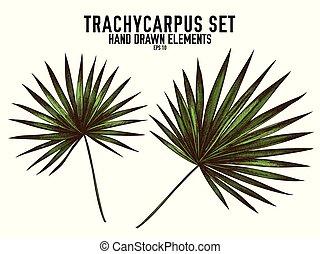 ベクトル, 手, trachycarpus, 引かれる, コレクション, 有色人種