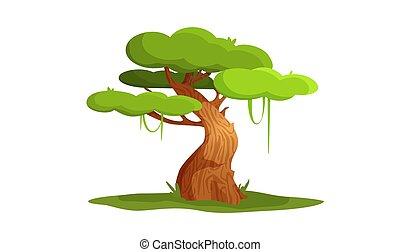 ベクトル, 木。, 特徴, イラスト