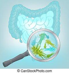 ベクトル, 植物相, バクテリア