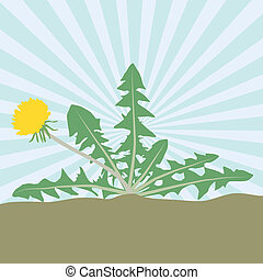 ベクトル, 背景, 花, カード, タンポポ