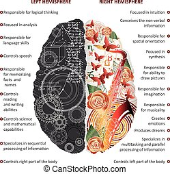 ベクトル, 脳, 左, 権利, 半球, infographics, イラスト