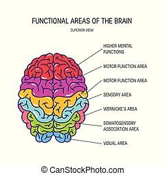 ベクトル, 脳, 概念, 人間