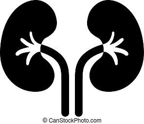 ベクトル, 腎臓, pictogram