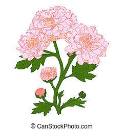 ベクトル, 菊, flower.