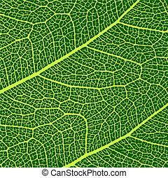 ベクトル, 葉, マクロ, 手ざわり
