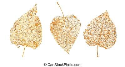 ベクトル, 葉, birch., designs., 自然, アスペン, 金, skeletons., セット, 秋, ...