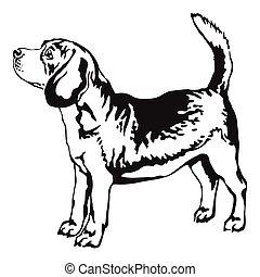ベクトル, 装飾用である, 肖像画, ビーグル犬, 地位, イラスト