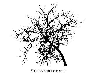 ベクトル, 裸, シルエット, アップル, ブランチ, illustration., 木