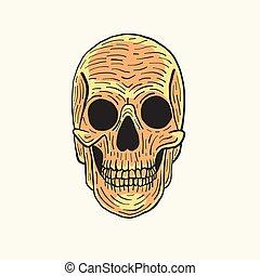 ベクトル, 頭骨, 隔離された, イラスト, 背景, 人間, 白