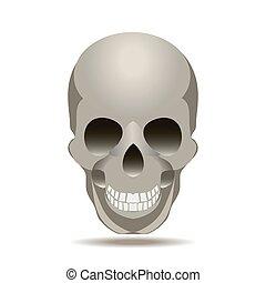 ベクトル, 頭骨