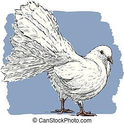 ベクトル, 鳩, 白, 図画