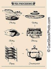 ベクトル, infographics, ∥で∥, イラスト, の, お茶, processing., 手,...
