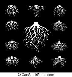ベクトル, roots., 白, セット, illustration.