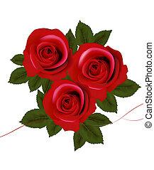 ベクトル, roses., illustration., 背景, 赤