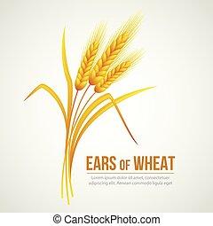 ベクトル, wheat., イラスト, 耳