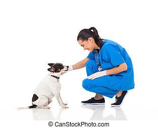 ペット, 遊び, 獣医, 犬, 医者