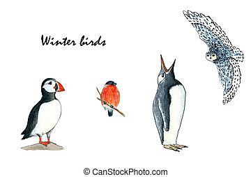 ペンギン, 図画, 手, ツノメドリ, bullfinch, カラフルである, セット, sketch., イラスト, birds-, owl., 水彩画