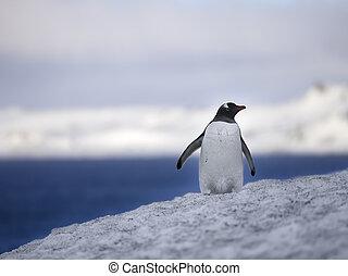 ペンギン, 雪, 光景