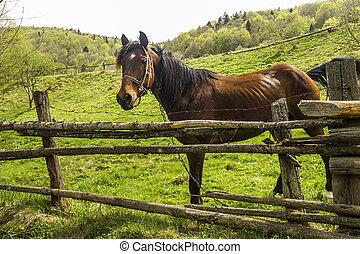 ペン, 馬